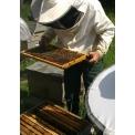 miel de toiture - <p>Miel et ruche en toiture, membranes dépolluantes, toitures végétalisées, toitures-terrasses aménagées... vos toitures y ont droit !<br />Pour tous renseignements, n'hésitez pas à nous contacter ou à nous rendre visite sur le salon (stand n°B029), venez goûter au miel GREEN ETANCHEITE sur notre stand.</p>